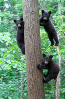 Spring Cubs & Yearlings